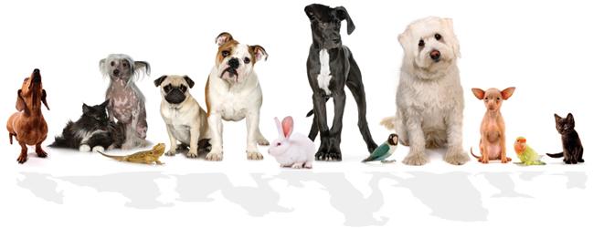 veterinario_sl.jpg